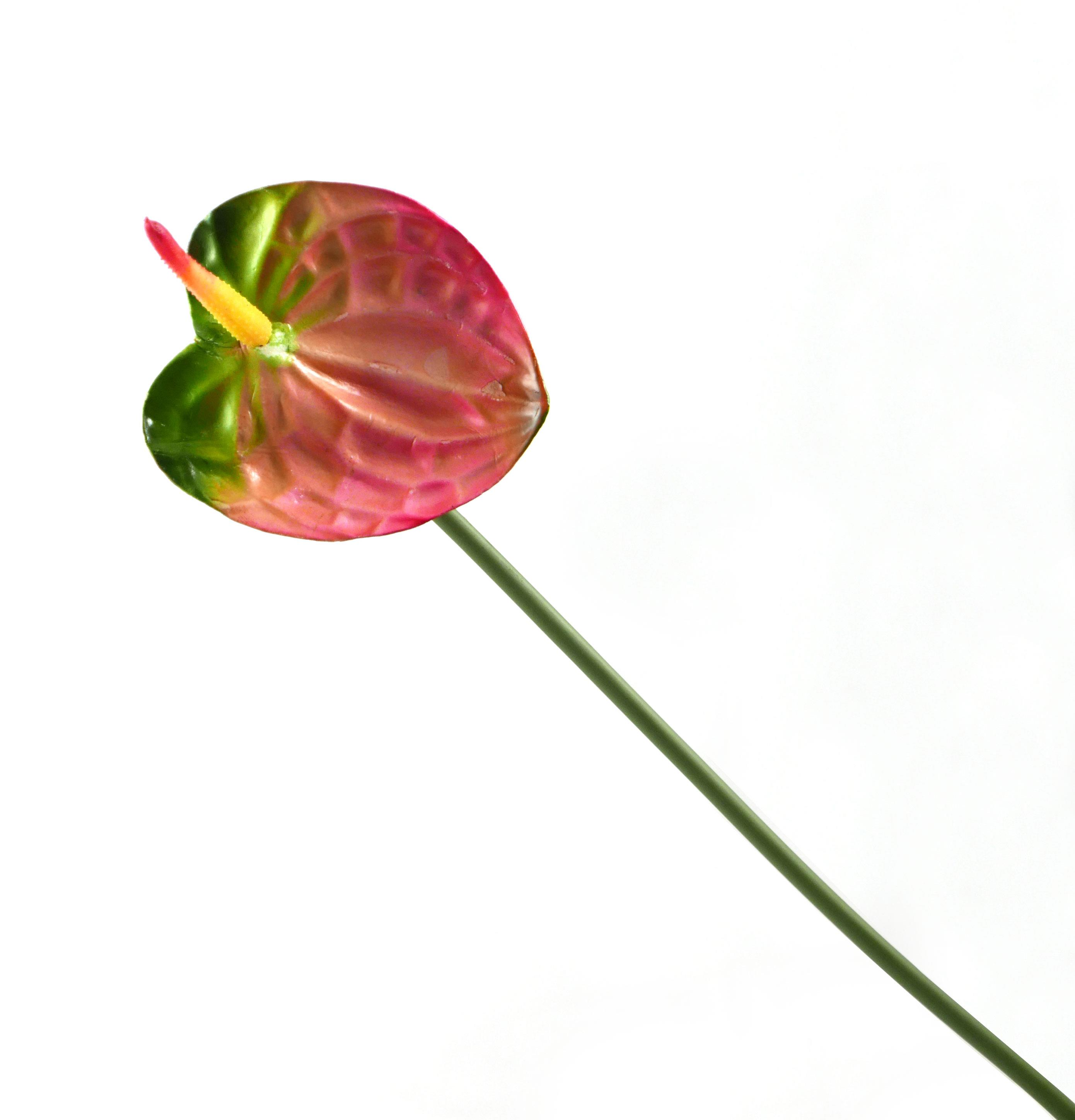 Anthurium Stick