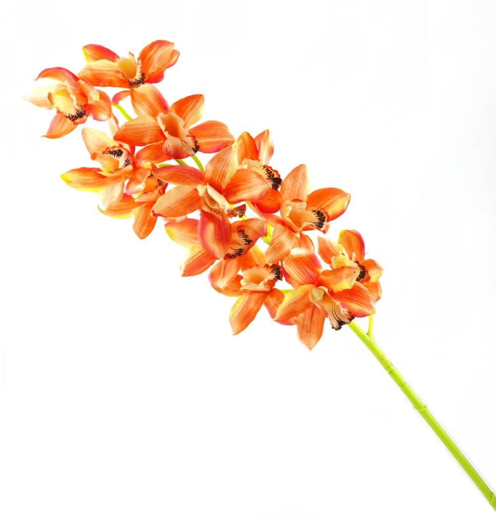Cymbidium  Stick