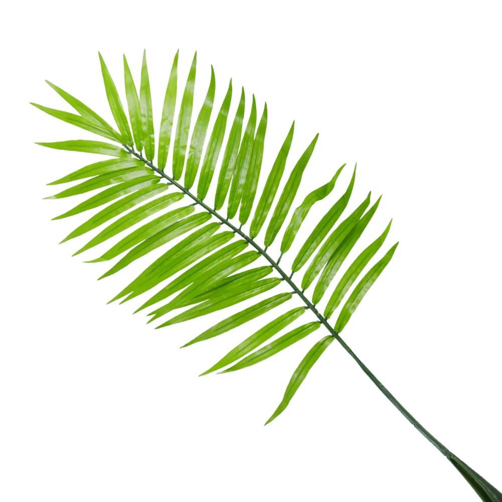 Areca Palm Leaf